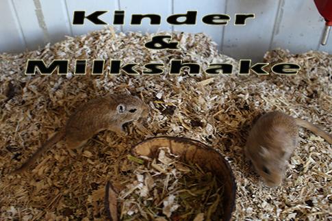 kinder & milkshake
