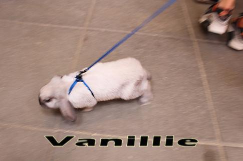 vanillie